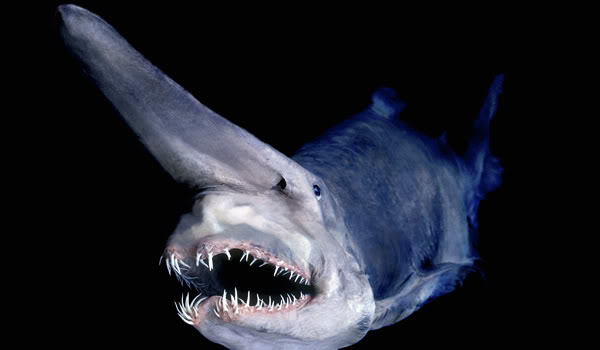si tu tienes pesadillas con freddy krueger, los tiburones tienen pesadillas con el tiburon duende, palabra